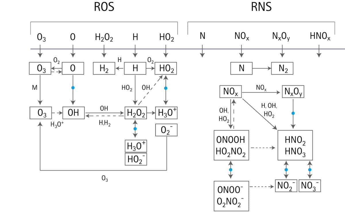RONS (Reactive oxide and nitrogen species) oder auch reaktive Sauerstoff- und Stickstoff-Spezies bezeichnet verschiedene Sauerstoff- und Stickstoffbasierte Moleküle, wie sie im sekundären Plasma entstehen.
