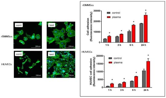 Mit Fluoreszenzmikroskopie wurde der Anteil und die Morphologie von rBMMSCs und HUVECs auf unbehandelten und behandelten Zirkon-Proben untersucht.